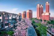 津南八里台镇优游官方海国际优游官方园城楼盘新居实在图片