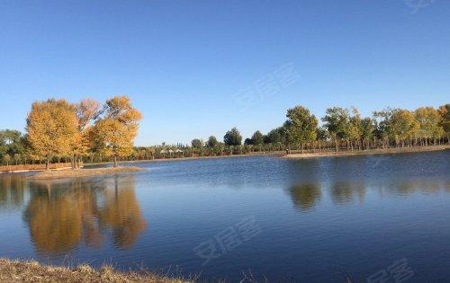 绿城玖悦府 800亩生态植物园一角